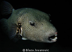 Out of the night; taken on the house reef in Marsa Shagra... by Blaza Jovanovic 